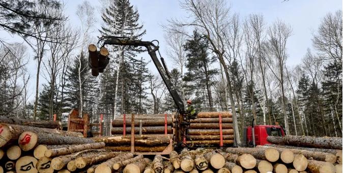 哈巴罗夫斯克边疆区取消木材采伐税收优惠政策