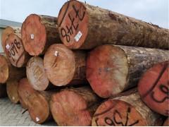 德容木业-辐射松原木