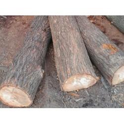 长期收梓木原木