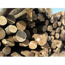 长期收楸木原木