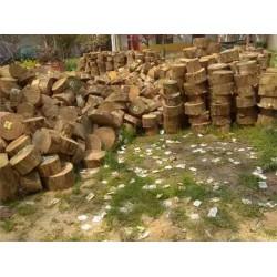 收购松木锯下来的木墩