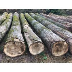 长期收购杨木原木