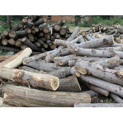 常年大量收购杨树原木