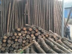 彭杨木业-打桩木