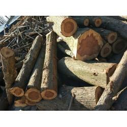 求购水杉原木