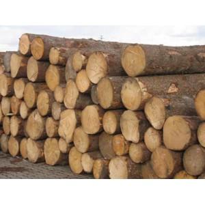 多禾木业-俄罗斯白松