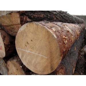 多禾木业-俄罗斯樟松