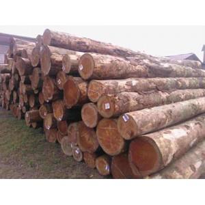 多禾木业-美国花旗松