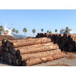 大量收购杉木原木