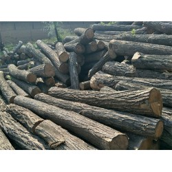长期求购槐木原木