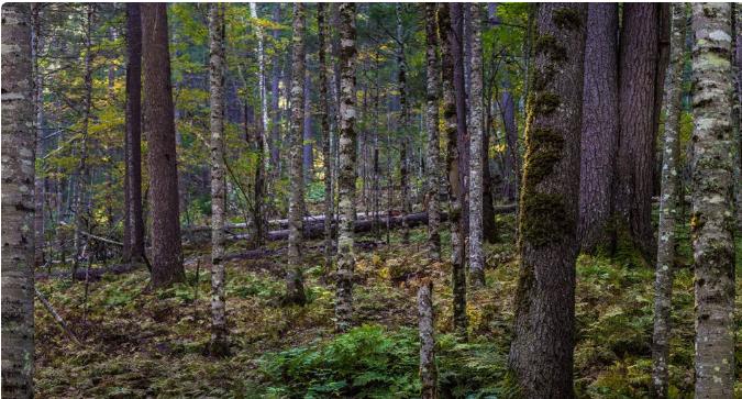 俄罗斯2019年前十个月林业产业生产概况