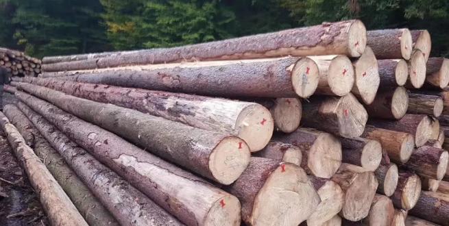 德国云杉原木
