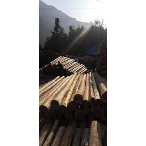 杉木、松木2020年货源充足要货的联系15285269213