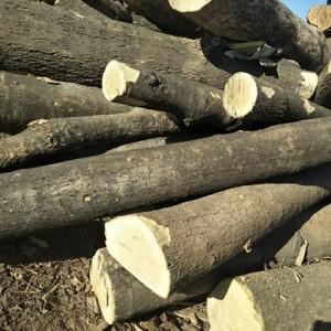 现有大量板栗木出售