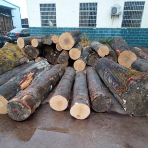 欧洲榉木一手货源、期货