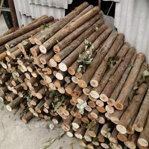 大量桉木小料出售