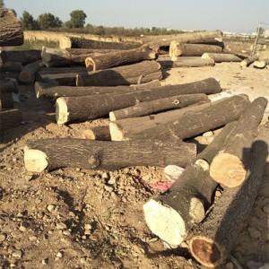 大量出售板栗木