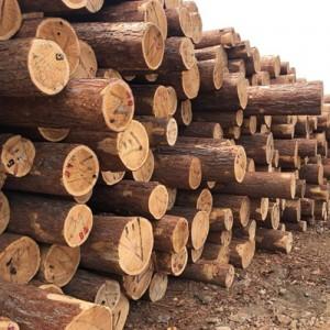 大量销售松木托盘料、建筑板方材