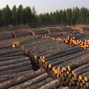 落叶松打桩木、坑木、绿化杆