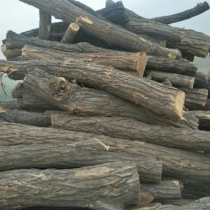 大量出售定节洋槐原木、桐木原木