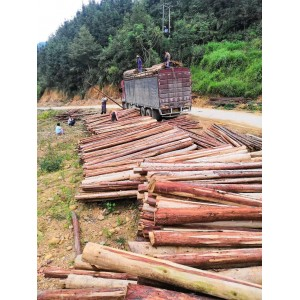 长期供应大量桉木、杉木