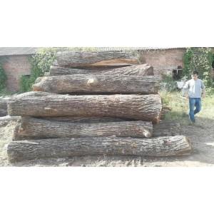 专业核桃木