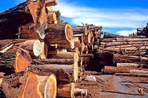 2019年俄罗斯加工木材出口量超过1980万立方米