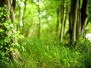 绿色植物命名的12个等级/阶元