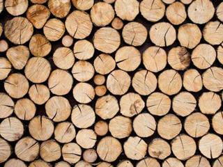 木材的化学成份