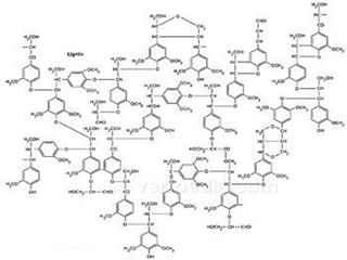 木素的概念、结构和性质