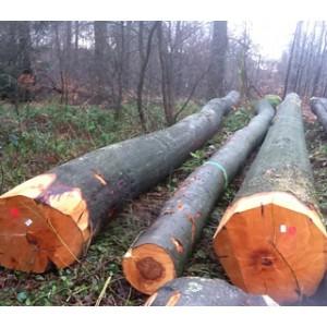 比利时特级山毛榉原木