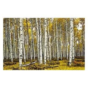 比利时特级桦木原木