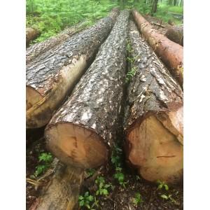 比利时特级松木原木