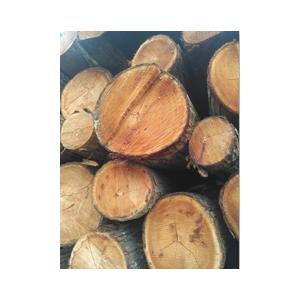 提供各种规格椿木 柏木 楸木