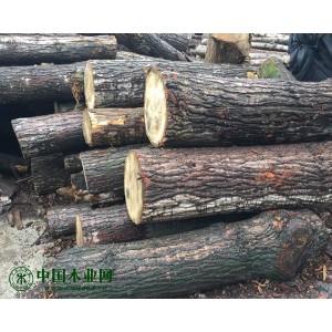 大量出售杨木 圆木 木方