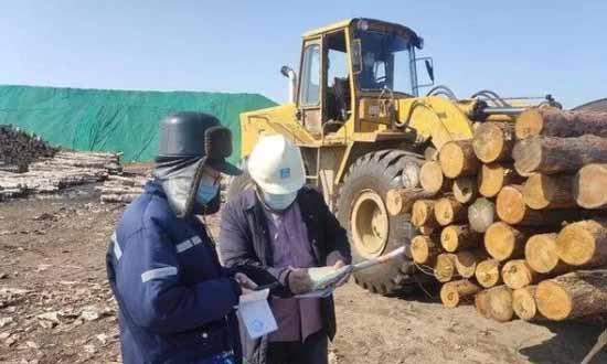 日加工原木1000余方!蓬莱临港木材产业复工复产