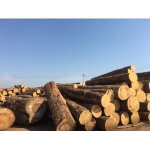大量供应进口松木均质刨花板