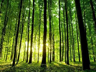 红木禁伐后,哪些木材将会越来越贵?