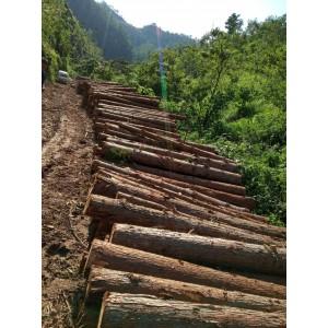杉木原木长期供应寻找爽快买家 磨磨唧唧勿扰