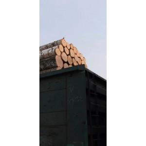 俄罗斯进口桦木原木出售
