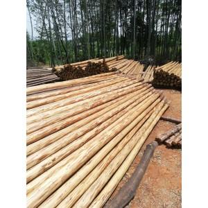 杉木大量供应