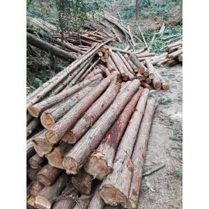 杉木及杉木制品大量供应