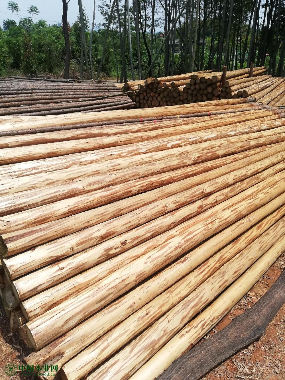 大量供应杉木原木及杉木制品