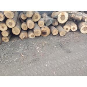 长期供应香樟木烘干家具板材