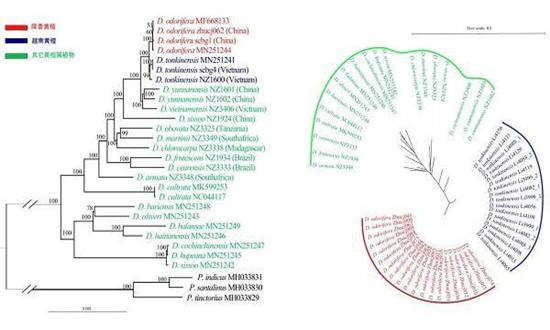 华南植物园研究解决降香黄檀和越南黄檀木材的精准鉴定难题