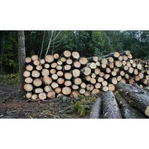 供应桉木原木7000~8000立方