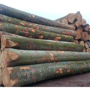 比利时大径级欧洲山毛榉原木