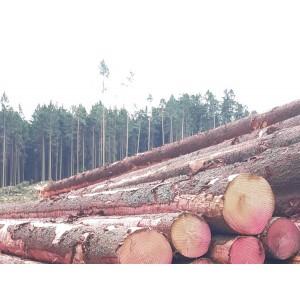 比利时特级云杉原木