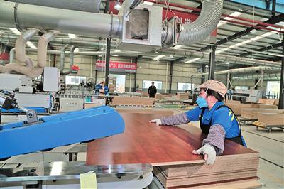 """广西来宾以项目引领产业发展,全力延伸""""林业+""""产业链!"""