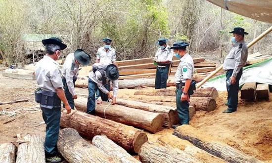 上财年缅甸查获44000吨走私木材 包括这些名贵木料